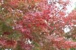 IMG_0351 紅葉2.jpg