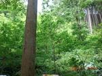 すこしずつ育ち行く、広葉樹の森.jpg